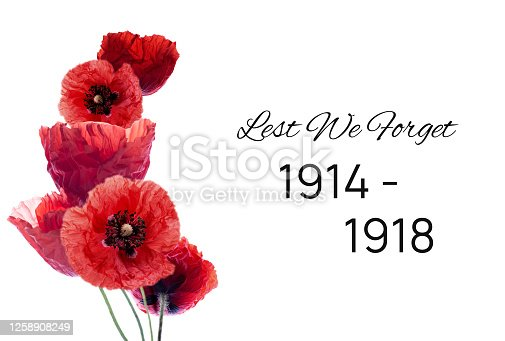 Remembrance day banner with red poppy flowers against white background. Memorial for vicrtims of World war