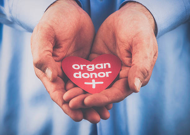 reminder of the importance of being an organ donor - heart internal organ stock photos and pictures