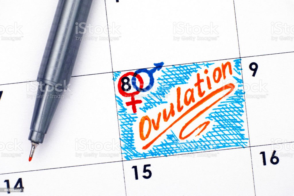 Ovulación de recordatorio en el calendario con rotulador naranja. - foto de stock