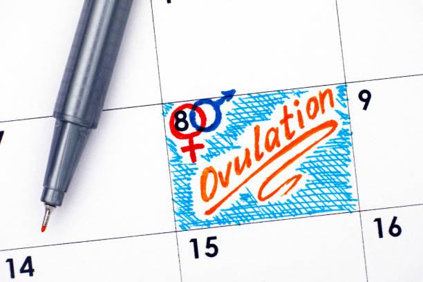 Reminder Ovulation in calendar with orange pen. stock photo