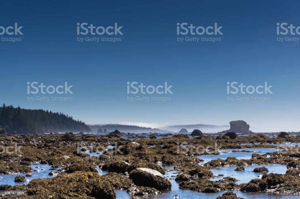 Remote Beach on the Olympic Peninsula stock photo