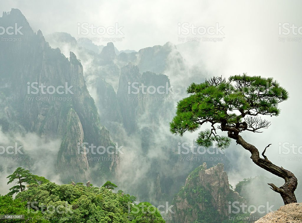 remote Huangshan Pine stock photo