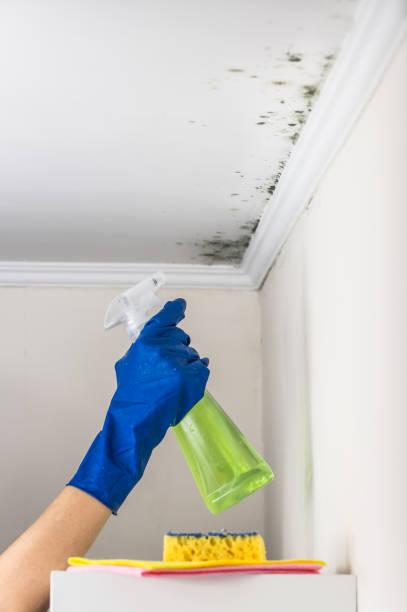 die wohnräume mit substanz reinigung entfernen schimmel - fleckenentferner stock-fotos und bilder