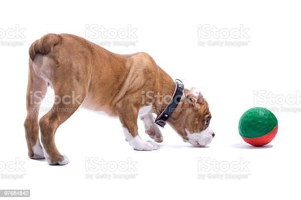 Renascence bulldog puppy picture id97684842?b=1&k=6&m=97684842&s=612x612&h=jkt7muq7fxd2cnyoayq86obw6agdnfwdb2pnieo8dbo=