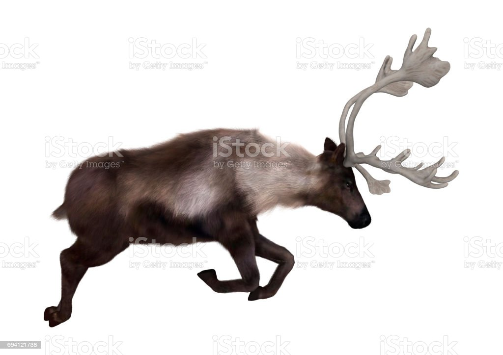 3D Render North American Caribou on White stock photo
