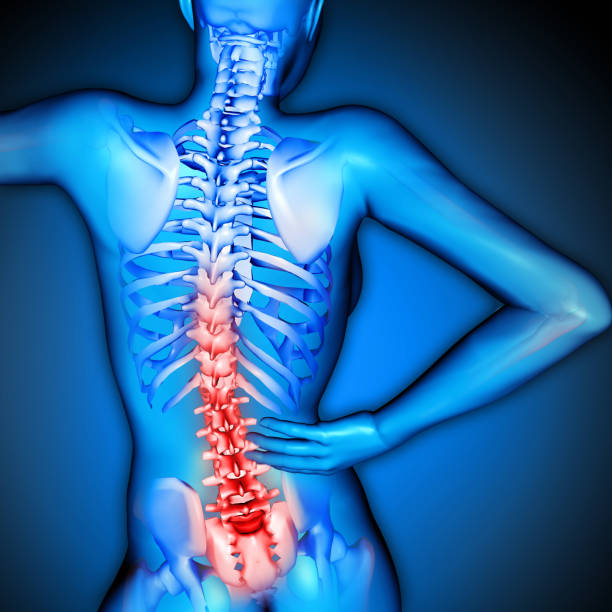 3D render of a female figure  with spine highlighted stock photo