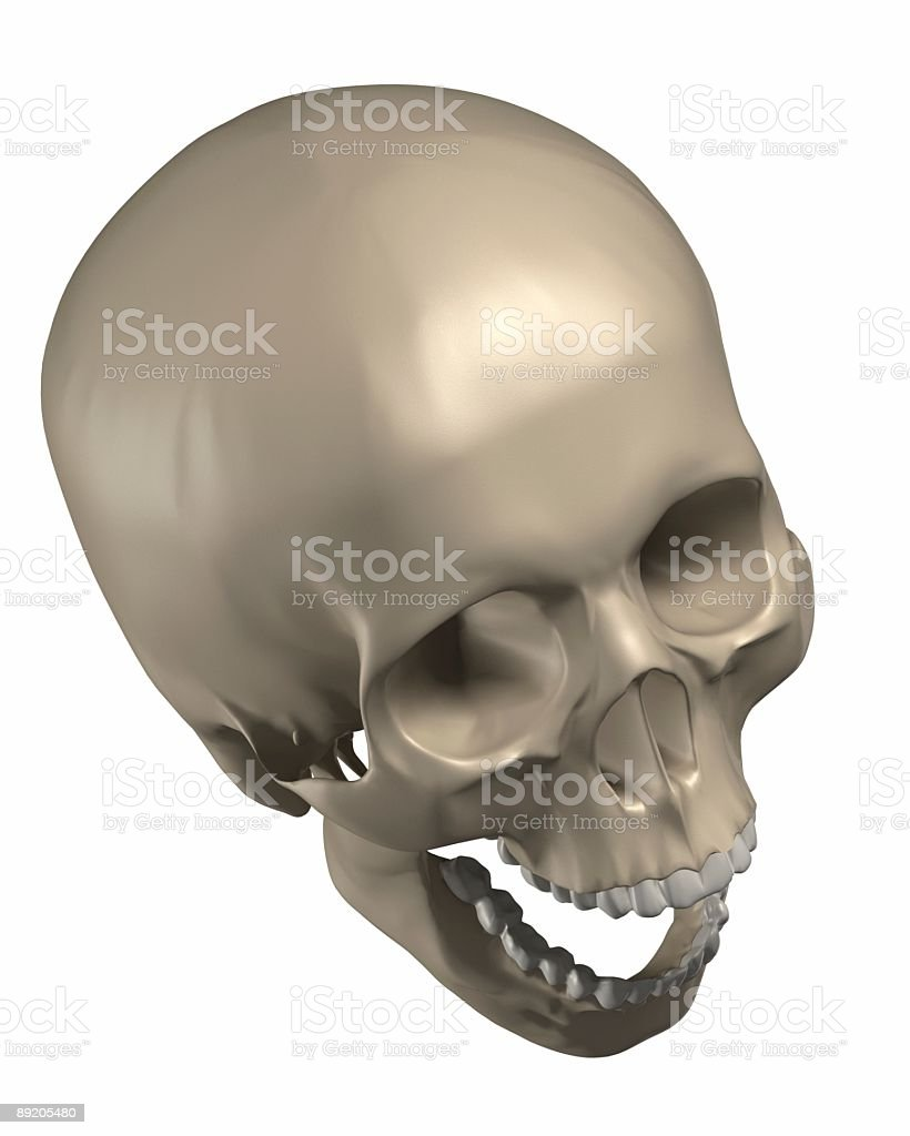 3d Render Of A Human Skull Stock Photo More Pictures Of Anatomy