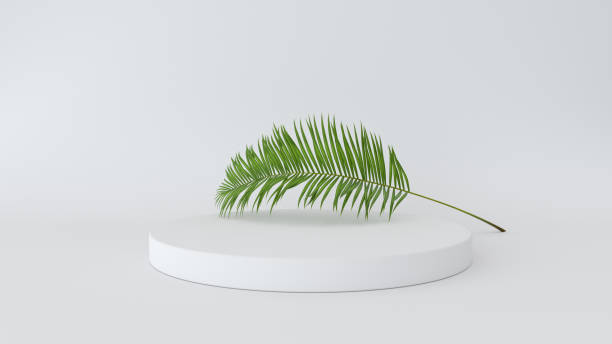 3D render of abstract platform with palm leave. Geometric figures in modern minimal design. Realistic mock up for product display stock photo