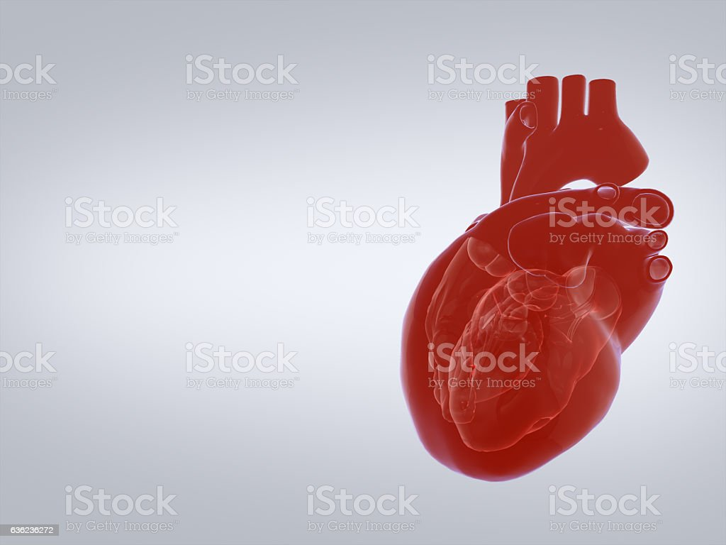 3D render of the human heart. – Foto