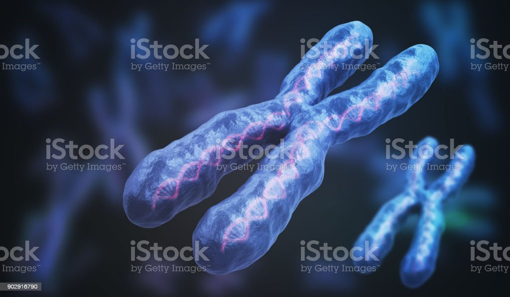 3D rendered illustration of chromosomes. Genetics concept. stock photo