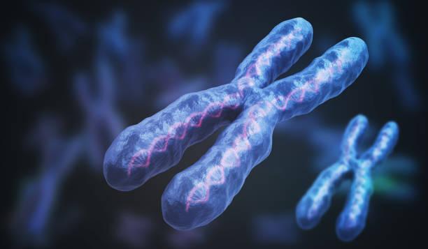 3D rendered illustration of chromosomes. Genetics concept. stock photo