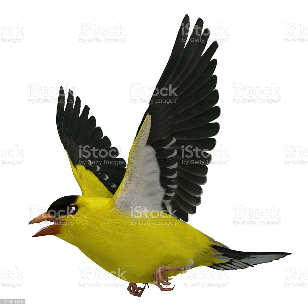 3D Rendered Spinus Tristis 'American Goldfinch' stock photo