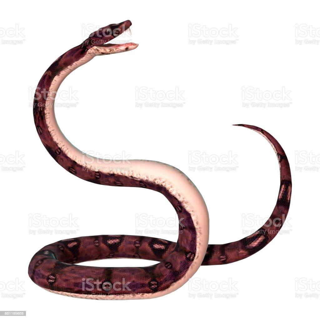 3D rendering anaconda snake on white stock photo