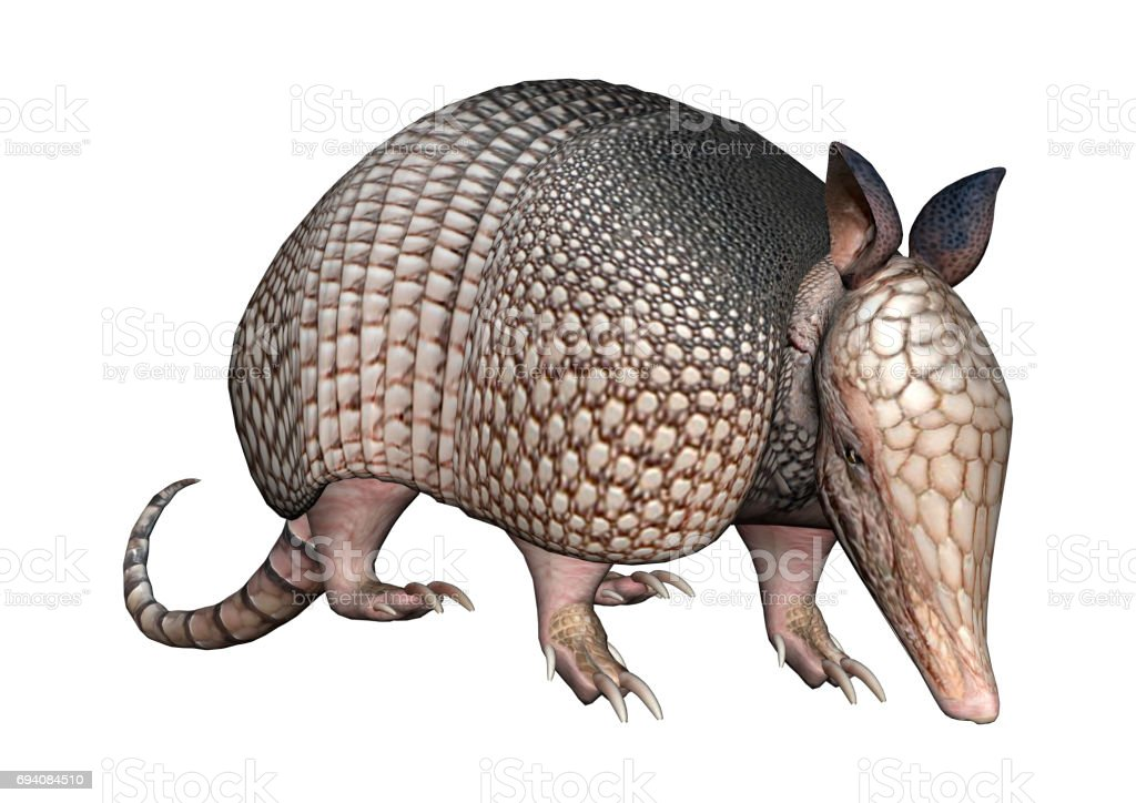 3D Rendering Armadillos on White stock photo