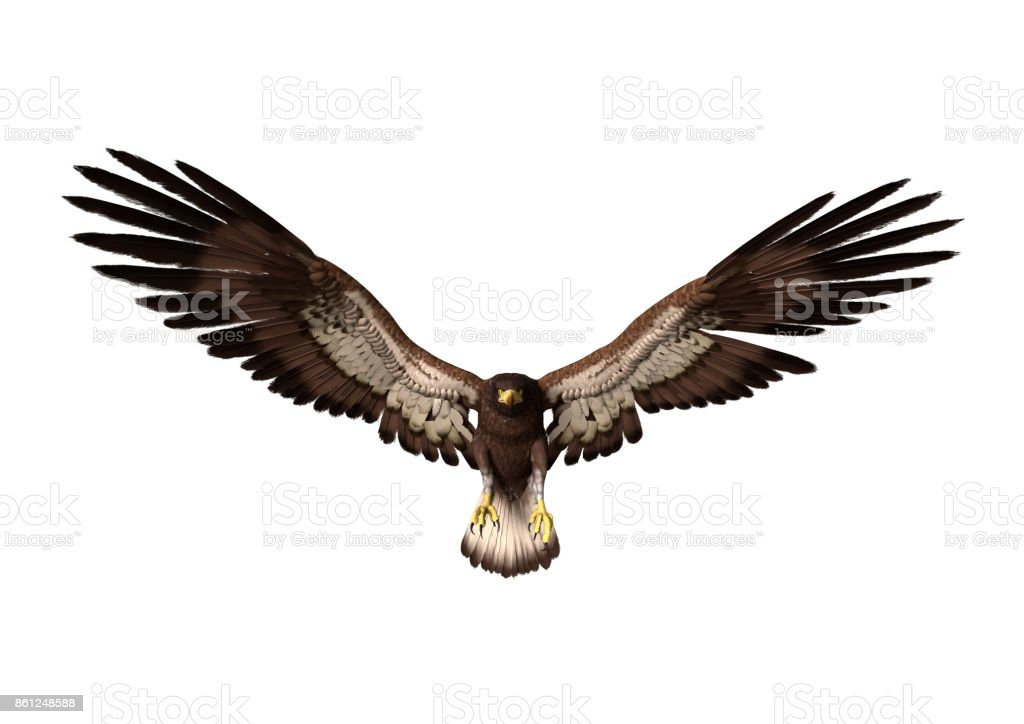 3D rendering bald eagle on white stock photo