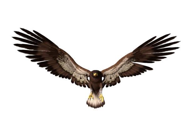 화이트에 3d 렌더링 대머리 독수리 - 육식조 뉴스 사진 이미지