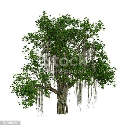 istock 3D Rendering Banyan Tree on White 695552232