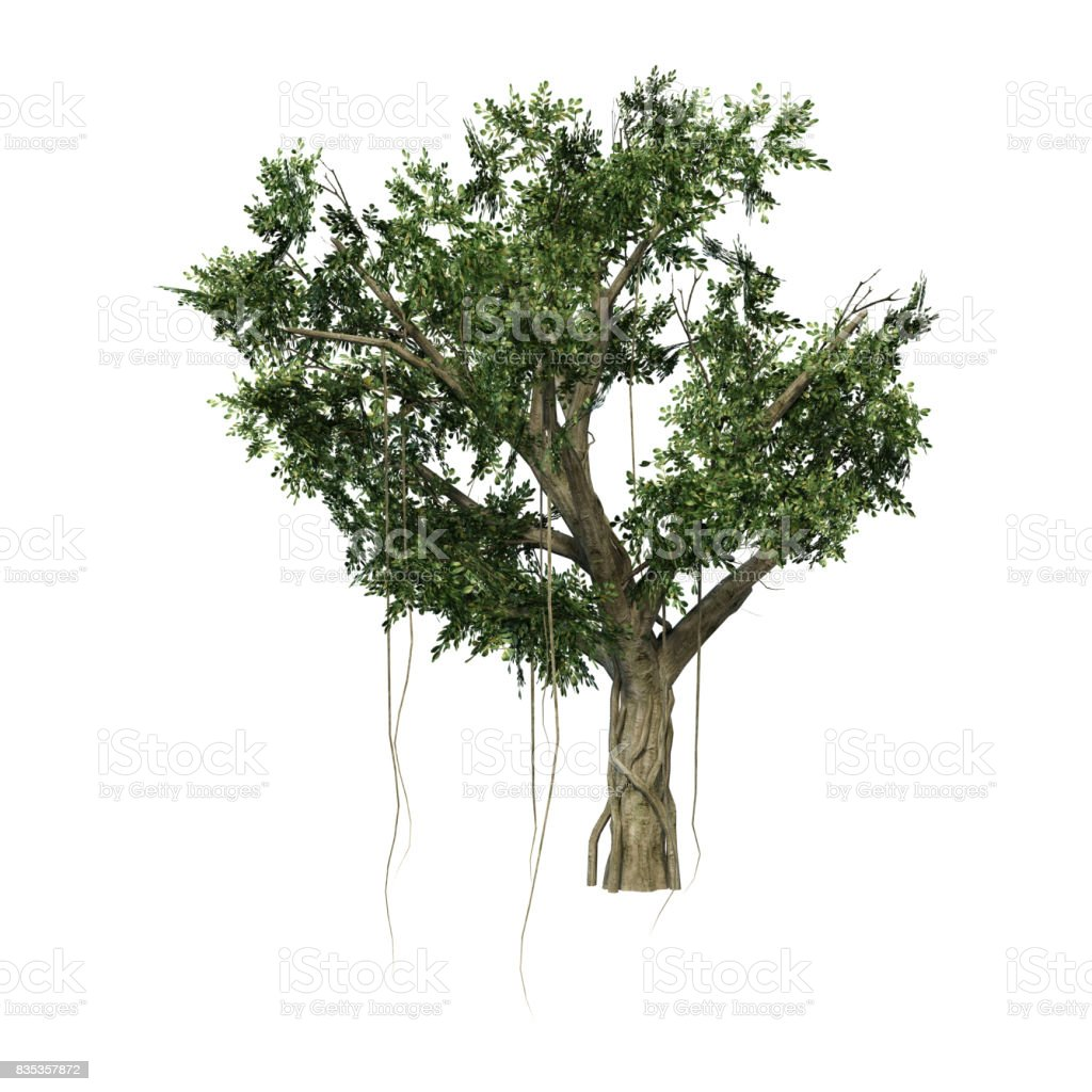 3D Rendering Banyan Tree on White stock photo
