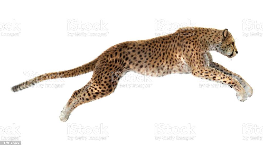 3D rendering big cat cheetah on white stock photo