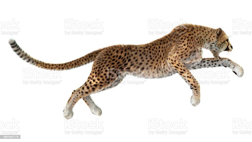 3D Rendering Big Cat Cheetah stock photo