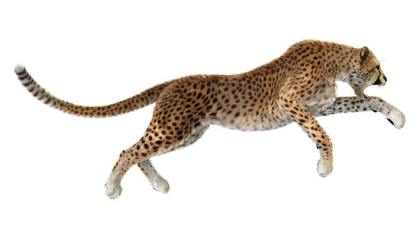 3d rendering big cat cheetah - big cat stock pictures, royalty-free photos & images