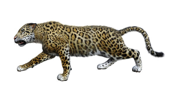 Rendering big cat jaguar on white picture id859775620?b=1&k=6&m=859775620&s=612x612&w=0&h=yrpsz8 b2kwk9fhv any7xk6itlumhnqp4gn2k16ohc=