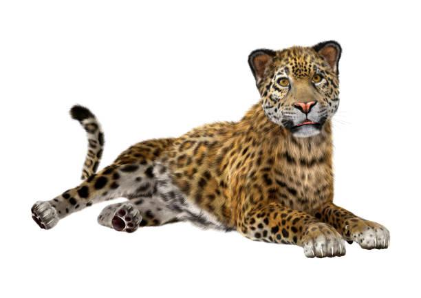 3D rendering big cat jaguar on white 3D rendering of a big cat jaguar isolated on white background jaguar cat stock pictures, royalty-free photos & images