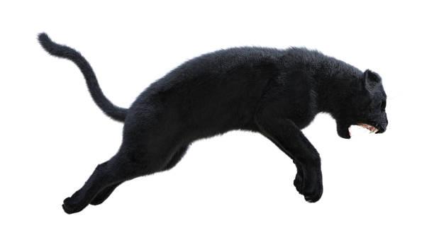 Rendering black panther on white picture id839076650?b=1&k=6&m=839076650&s=612x612&w=0&h=utzxunmctvko6xepheoh x9k03 po bjigqgkjyhpkw=