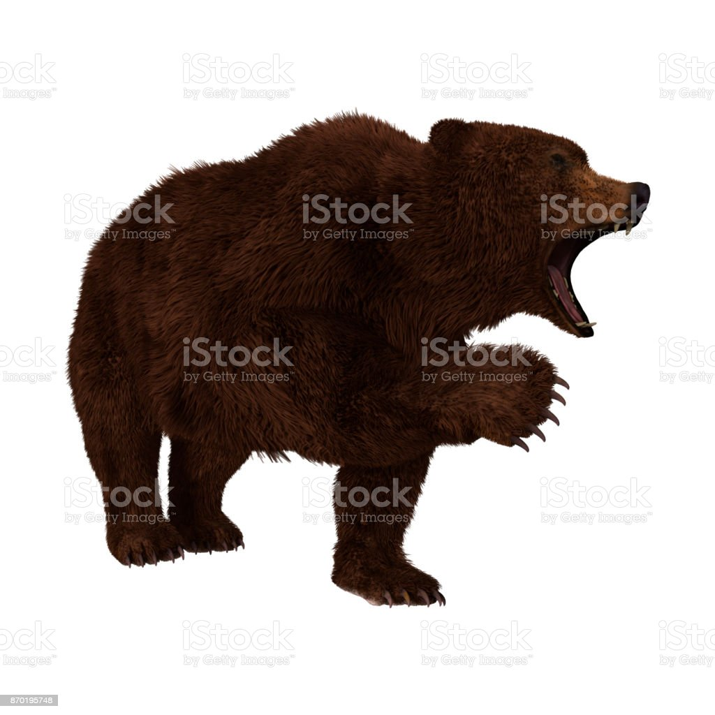 3D rendering brown grizzly bear on white stock photo