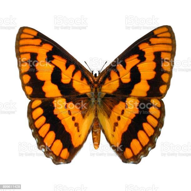 Rendering butterfly on white picture id899611428?b=1&k=6&m=899611428&s=612x612&h=dpgbemunfoou0ccxyd3e8jjlsg54vbbj3vhb1e ierc=
