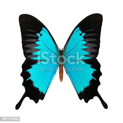 3D digital render of a Peacock Royal , or Tajuria cippus, a species of lycaenid or blue butterfly found in Asia, isolated on white background
