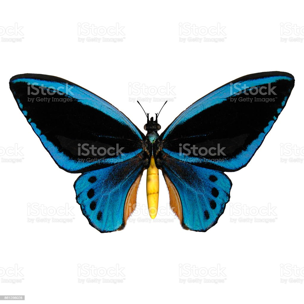 3D rendering butterfly onwhite stock photo