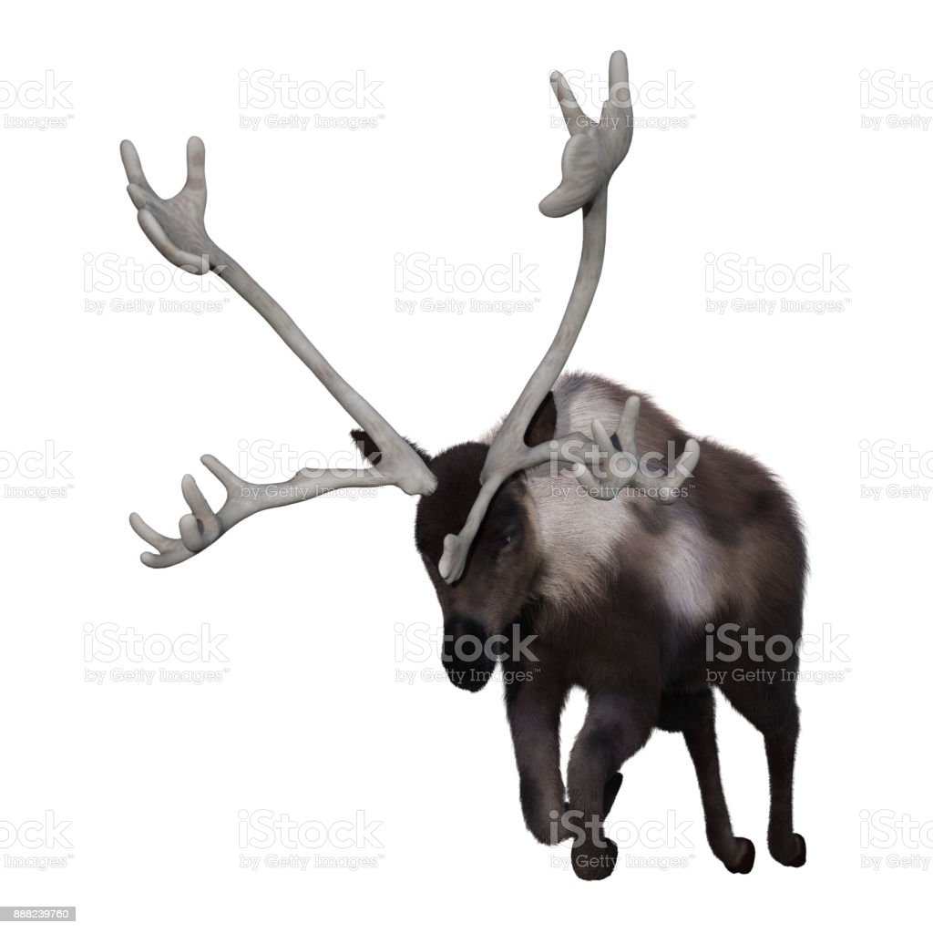3D rendering caribou on white stock photo