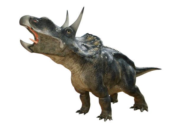 3d-rendering dinosaurier diceratops auf weiß - dinosaurier stock-fotos und bilder