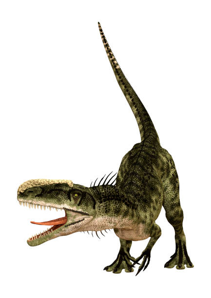 3d-rendering dinosaurier monolophosaurus auf weiß - dinosaurier illustration stock-fotos und bilder