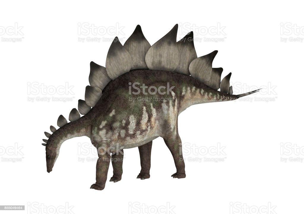 3D rendering dinosaur Stegosaurus on white stock photo