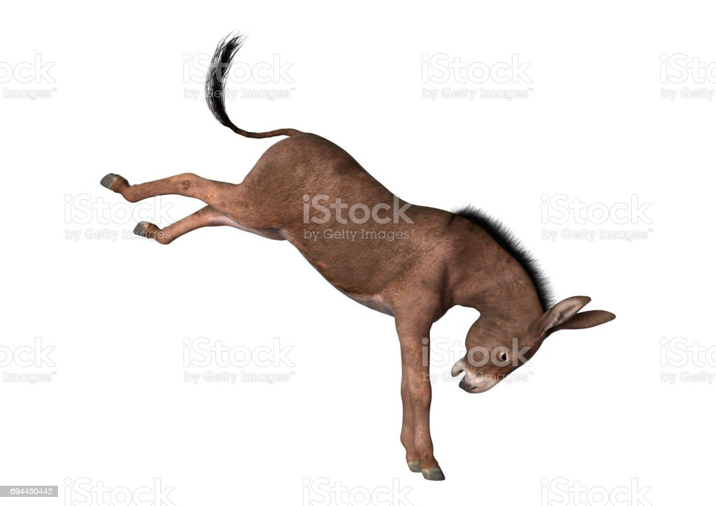 3D Rendering Donkey on White stock photo