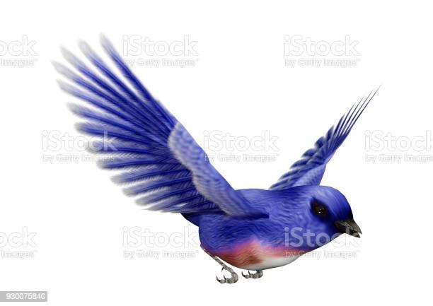 Rendering eastern bluebird on white picture id930075840?b=1&k=6&m=930075840&s=612x612&h=je7rghkhl7l dkhbnvtle8igesx l5a7osutskdf0f8=