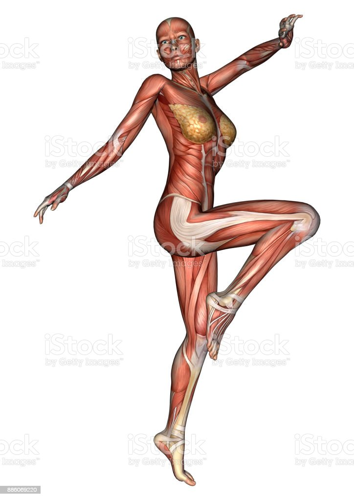 3d Rendering Female Anatomy Figure With Muscles Maps On White Stock