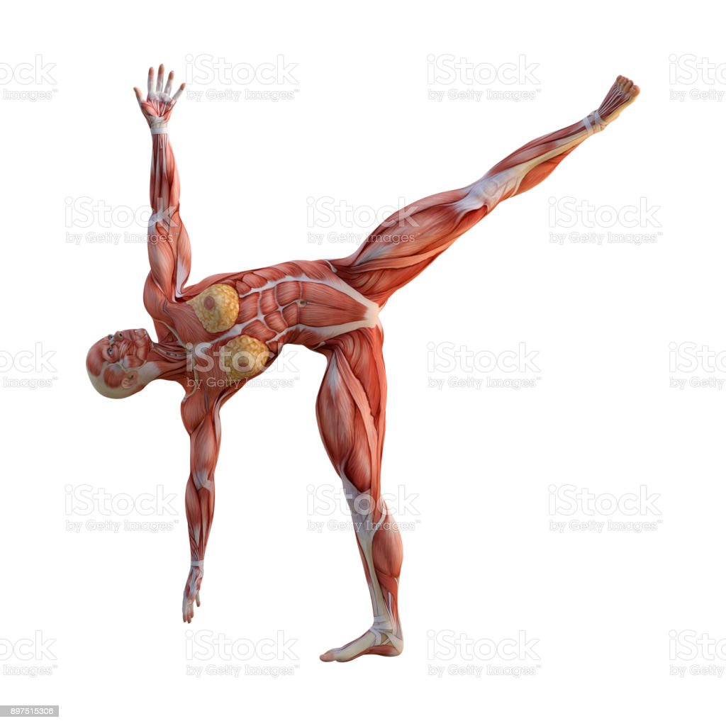 3d Rendering Figure With Muscle Maps Exercising Yoga On White ... on yoga energy, yoga international, yoga back, yoga stretches, yoga adrenal glands, yoga leg workout, yoga history, yoga skin, yoga peace, yoga anatomy, yoga strength, yoga mind, yoga bones,