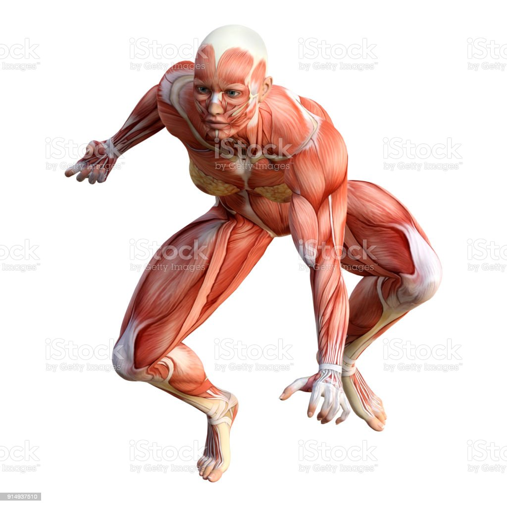 3D rendering female figure with muscle maps on white stock photo