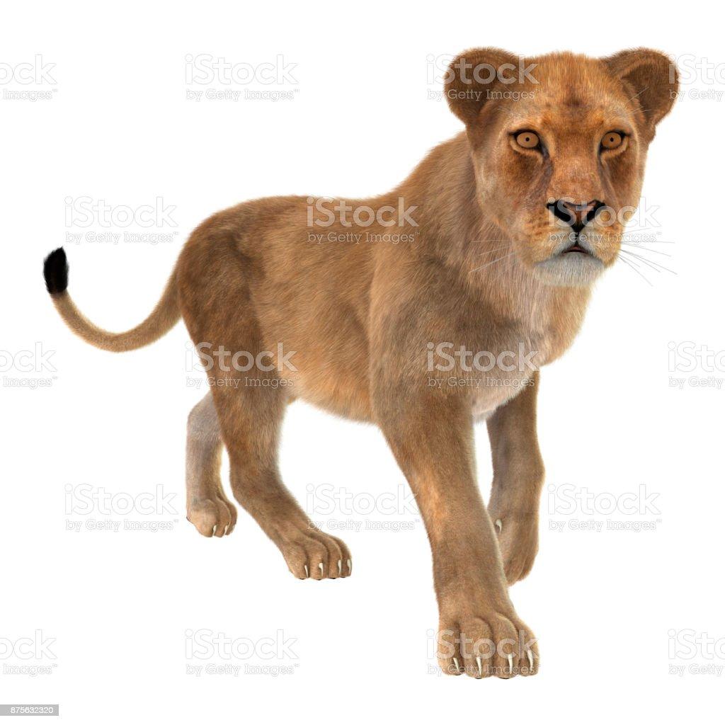 Beyaz dişi aslan oluşturma 3D stok fotoğrafı