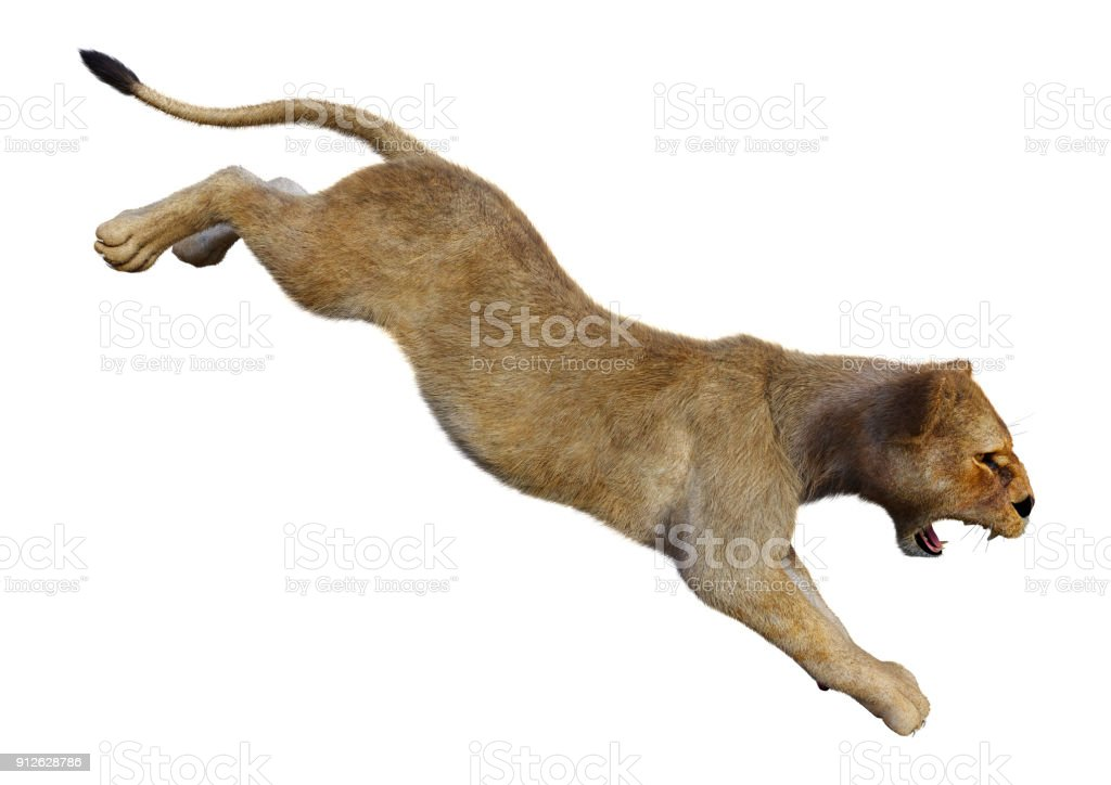 3D rendering female lion on white stock photo