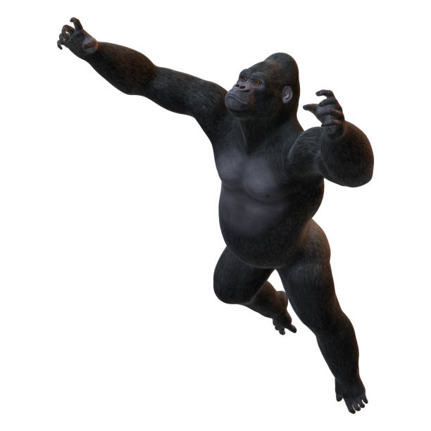 render 3d gorila en blanco - gorila fotografías e imágenes de stock