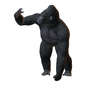 3D rendering of a Gorilla, a herbivorous ape, isolated on white background