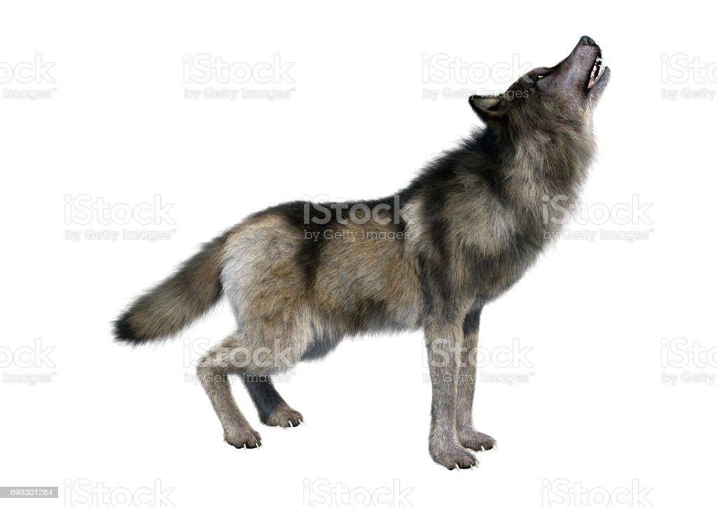 Loup gris de rendu 3D photo libre de droits
