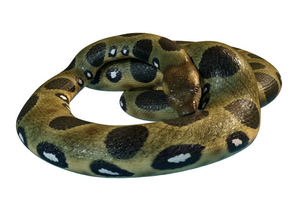 3D rendering green anaconda on white – zdjęcie