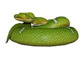 3D rendering green python snake on white