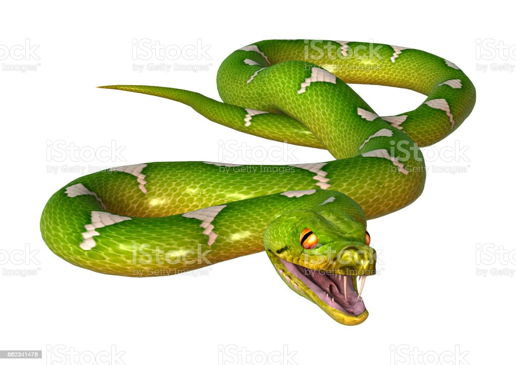 3D rendering green tree python on white stock photo