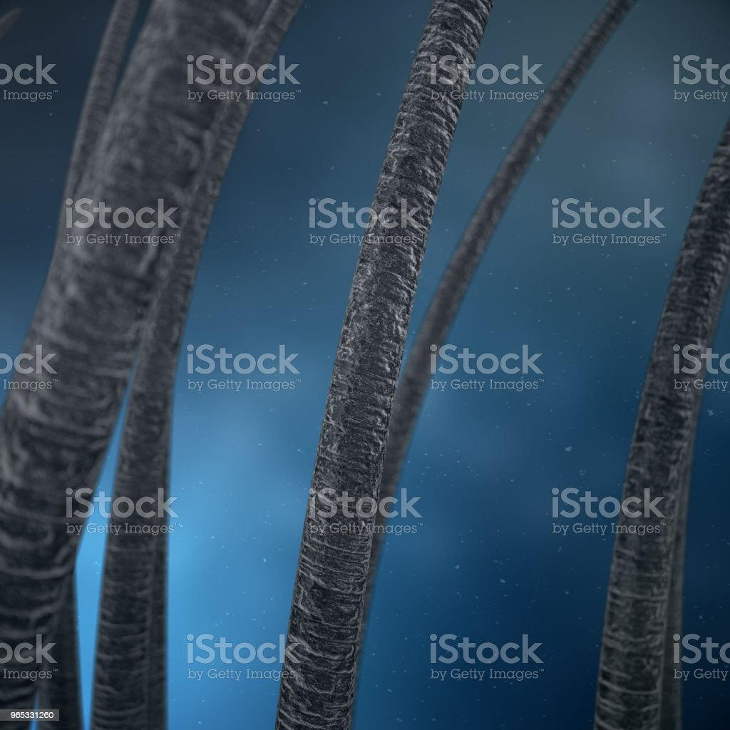 3D Rendering hair care. Treatment and care of hair. Hair under microscopic close-up view. royalty-free stock photo